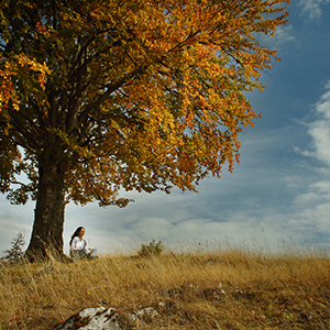 person sitting under tree in the fall